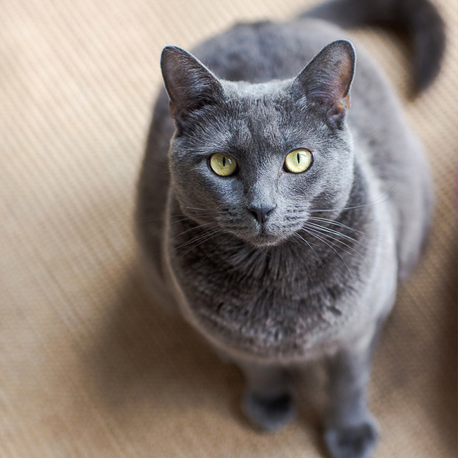What cats and introverts have in common. Click through to read our tips for their companions!